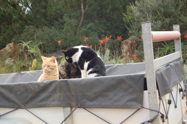 Shorty, Beamer and, almost hidden, Sweetie - enjoying the trailer life
