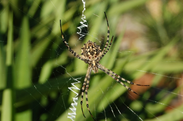 A resident - thankfully, only in the garden