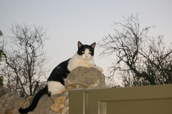 A confident Beamer on gatepost duty - before his bad experience.