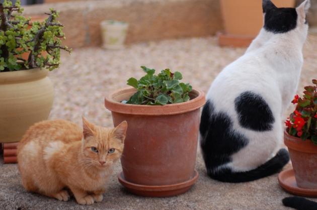Peanut, with Nibbles (right). No prizes for guessing how he got his name!