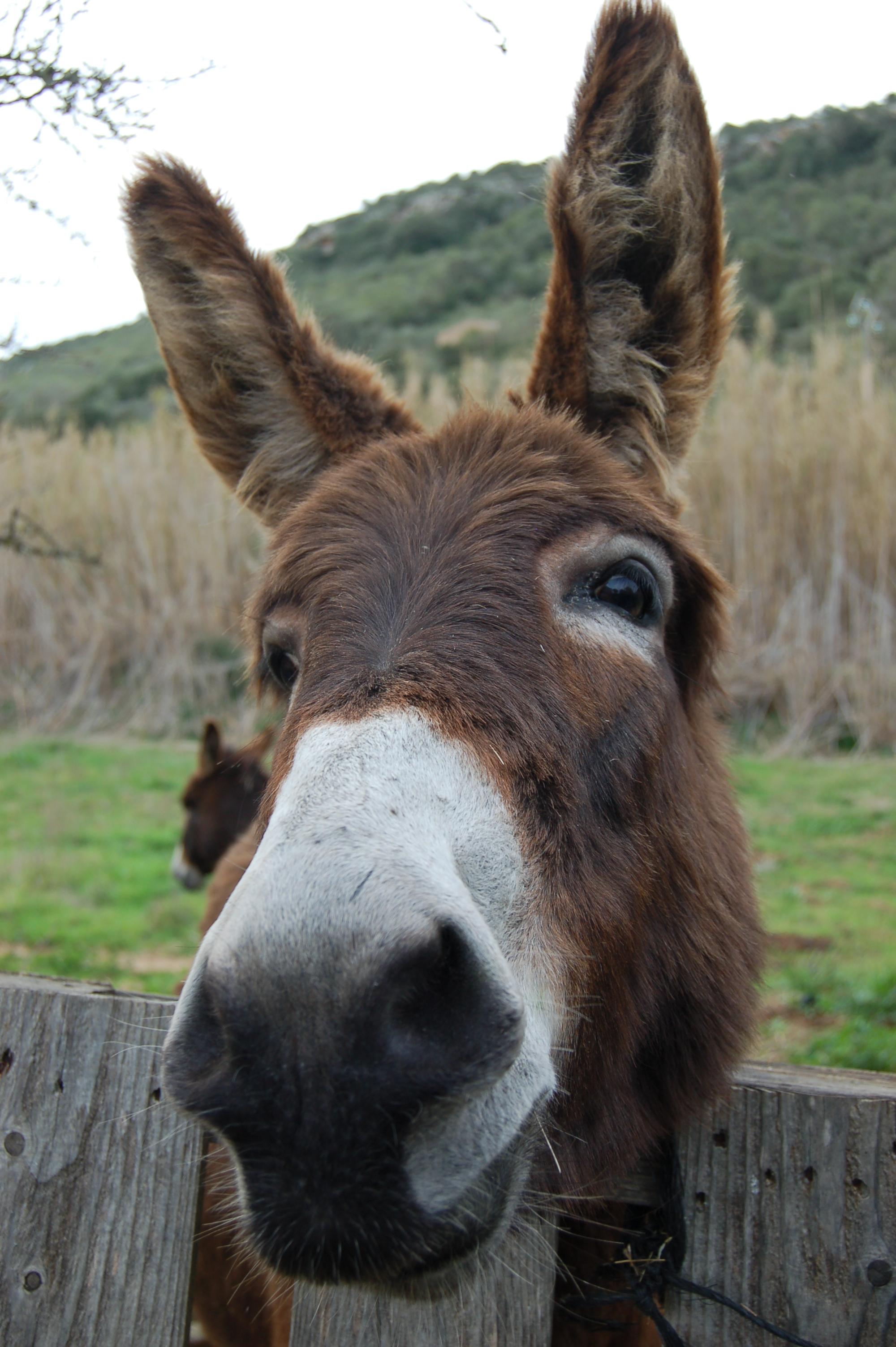 Donkey at a gate