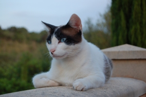 Dusty perched on the balustrade - surveying the glaring's territory.