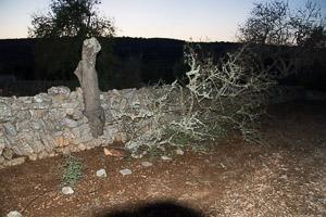 Another broken tree
