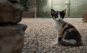 Tiny kitten on Mallorca