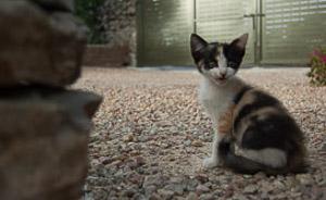 Tiny kitten on Mallorca
