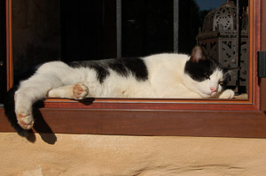 Cat napping in the sun