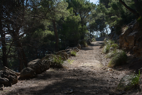 Mallorca woods walk