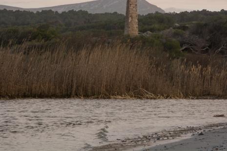 Mallorcan torrente