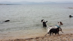 Dogs in the Mediterranean