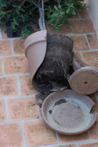 Broken terracotta pot