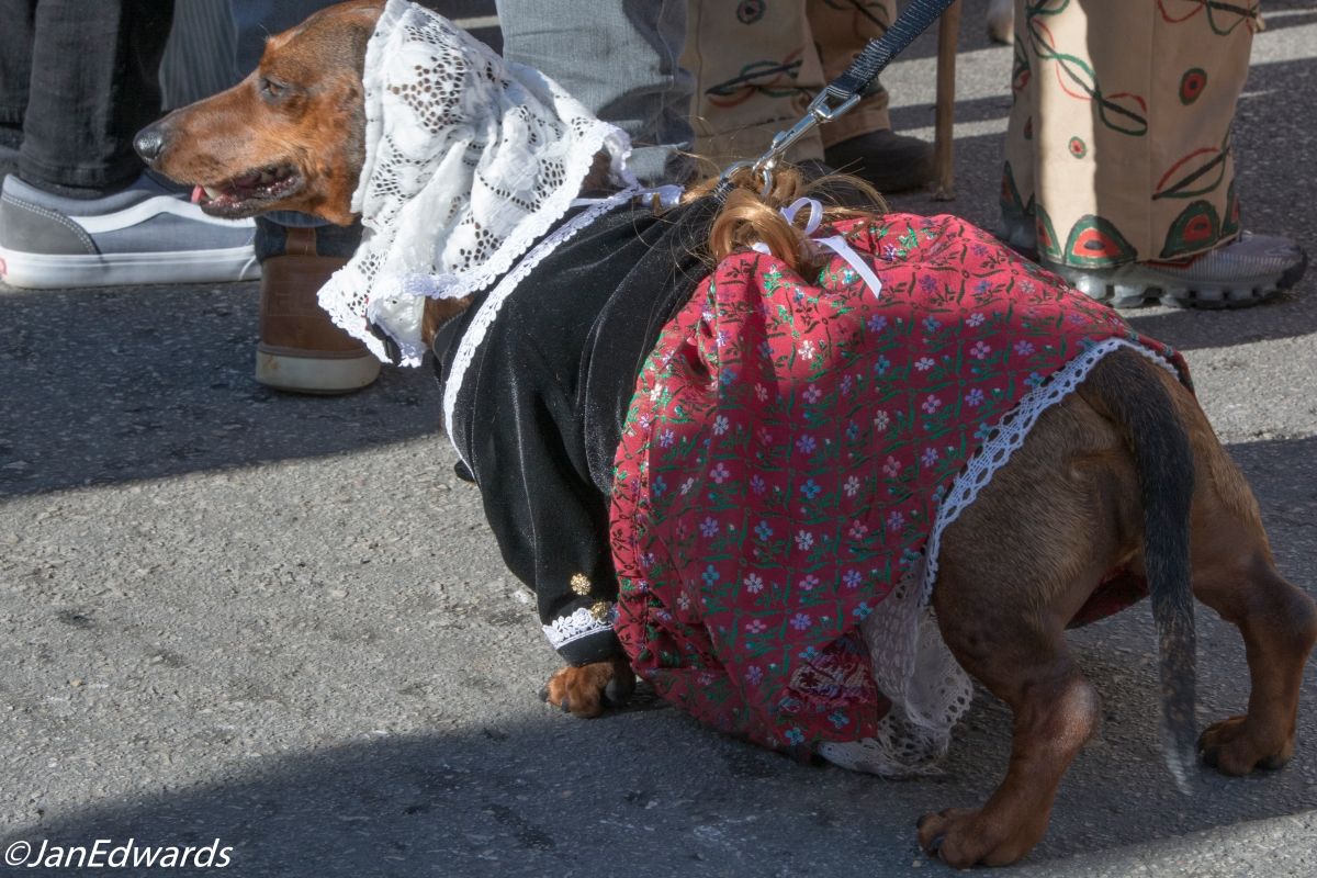 Dog in Mallorcan costume