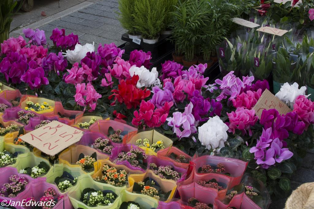 Plants on market at Sant Llorenc
