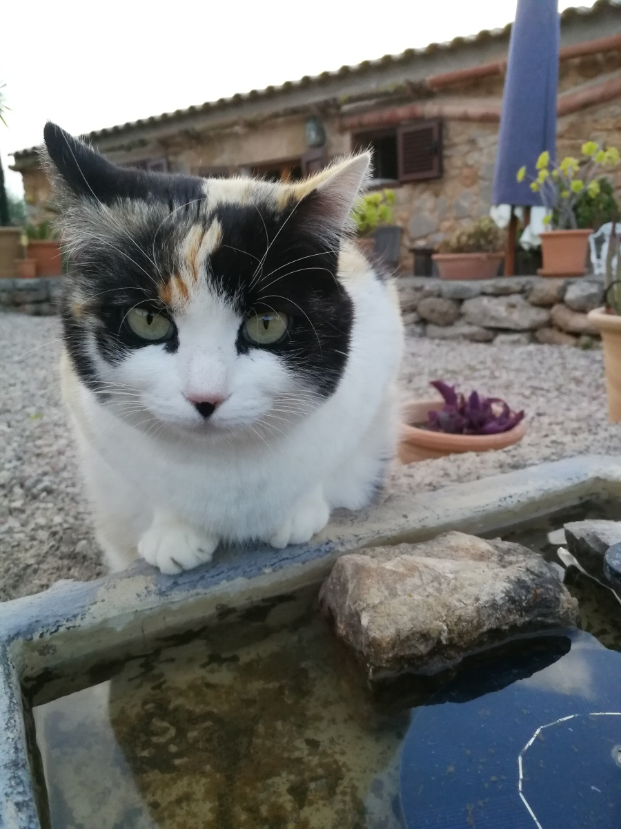 Cat at water source