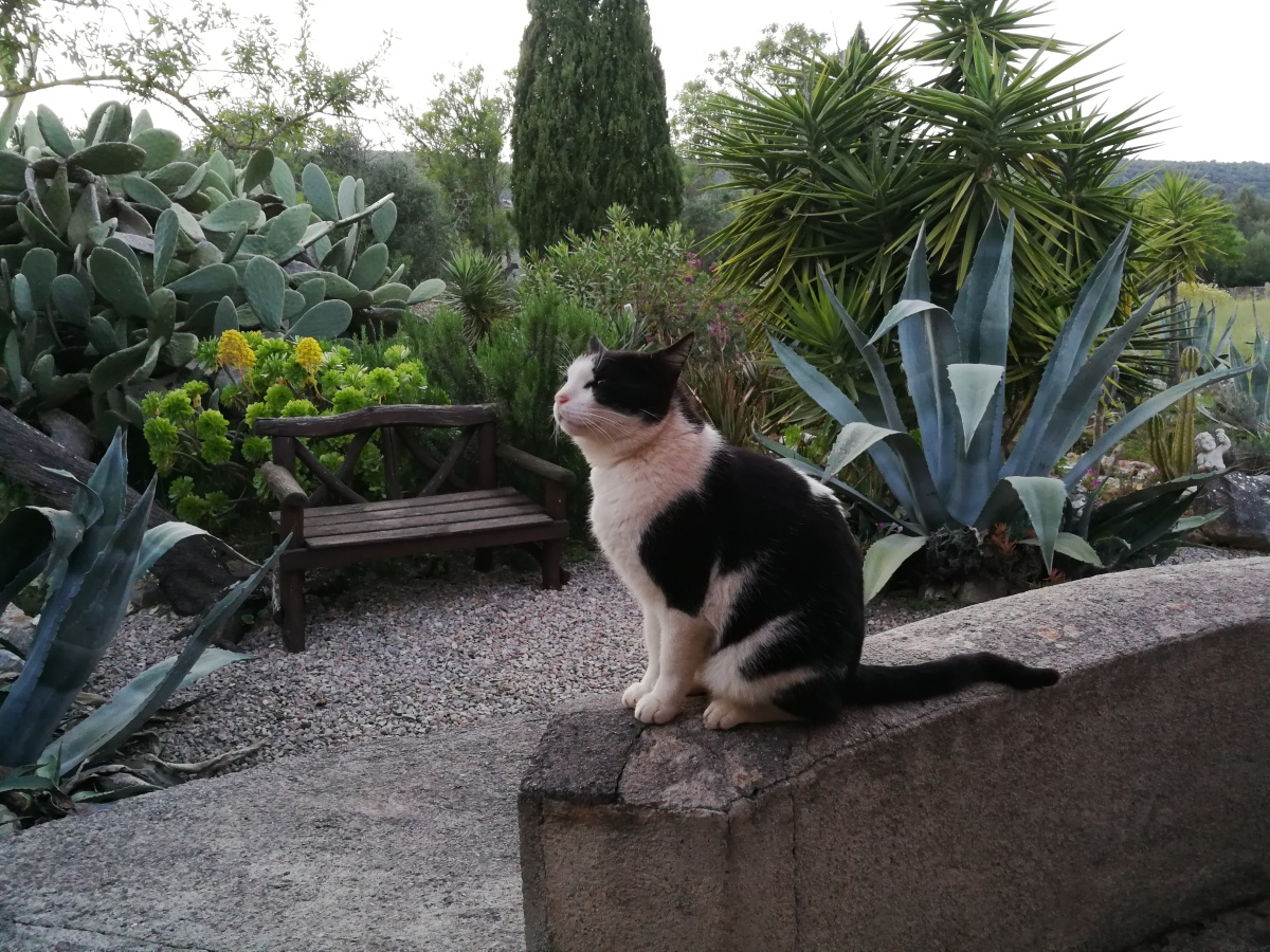 Black-and-white cat on a low wall