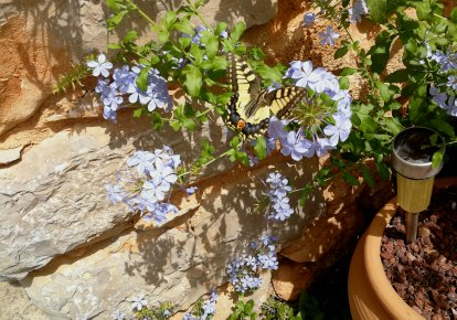 Butterfly in Mallorca