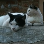 A recent picture of Chico (right) with his brother Nibbles